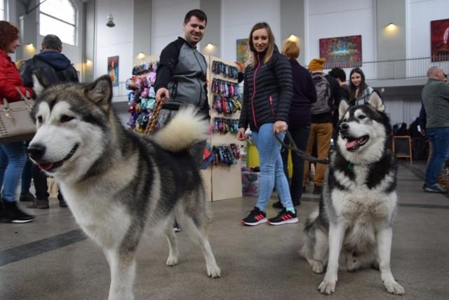 Psoty, czyli targi dla psów i kotów w Galerii Szyb Wilson w Katowicach
