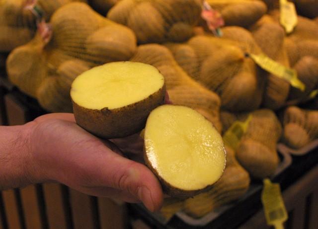 Pyry, czyli po poznańsku ziemniaki, wygrały w naszym plebiscycie na najpopularniejsze słowo gwarowe