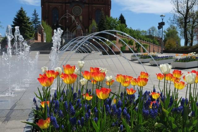 Wiosna w Rybniku. Zobaczcie, jak pięknie w naszym mieście!