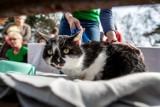 """Koty na wypadzie w Brzeźnie w poszukiwaniu właścicieli. Piąta edycja akcji gdańskiego Schroniska """"Promyk"""""""
