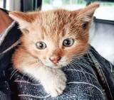 W Nowej Soli mały kotek utknął pod maską samochodu. Jego płacz wzruszył mieszkańców i policjantów