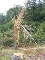 Wichury zniszczyły pracę pokolenia leśników