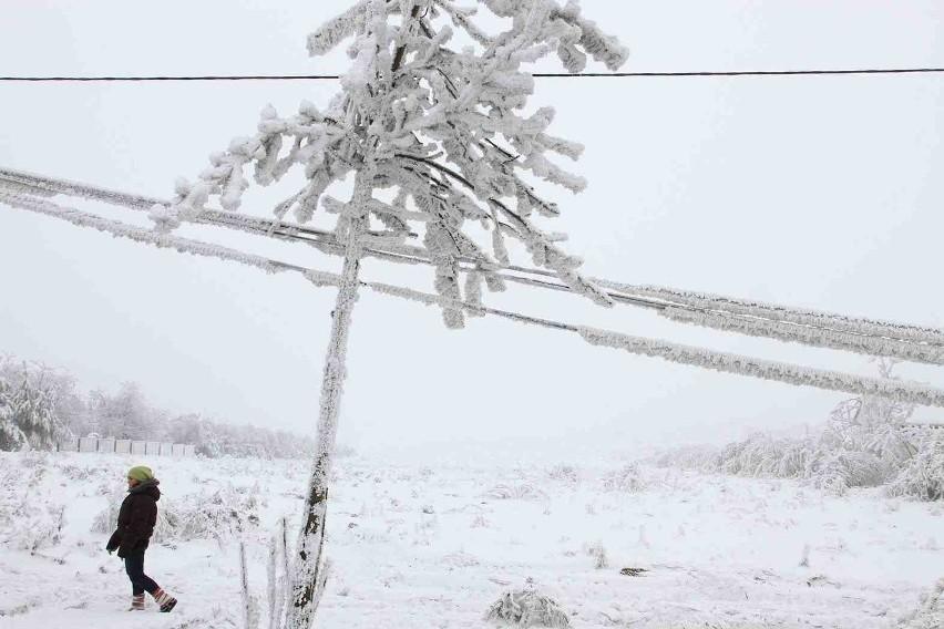 Opady śniegu i walące się na przewody energetyczne drzewa były m.in. przyczyną braku prądu