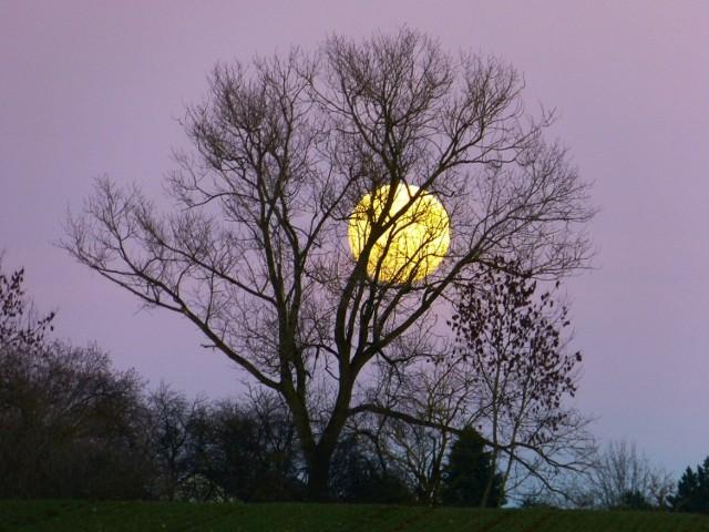Marzec to miesiąc, kiedy w ogrodzie mamy dużo do zrobienia. Zobacz, jak zaplanować prace zgodnie z fazami Księżyca.