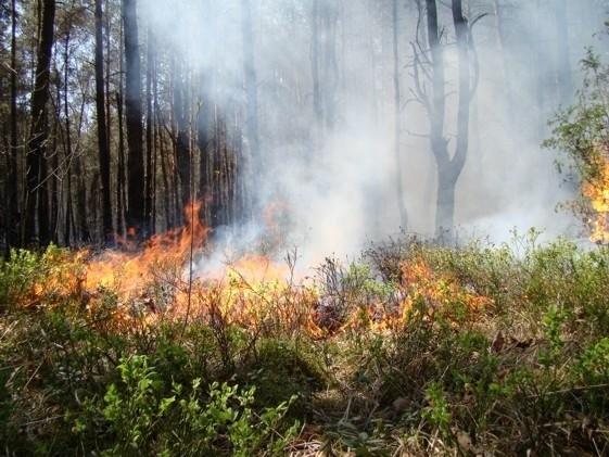W lubelskich lasach trzeci stopień zagrożenia