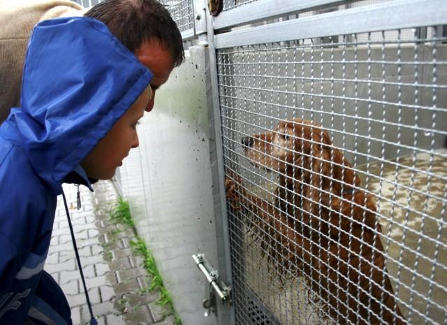 Lubelskie schronisko dla zwierząt: Dzień otwarty