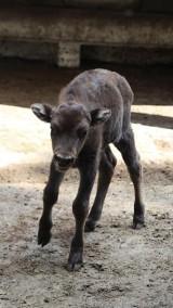 Warszawskie zoo zdradza imię nowego podopiecznego. Wiemy, jak głosowali internauci