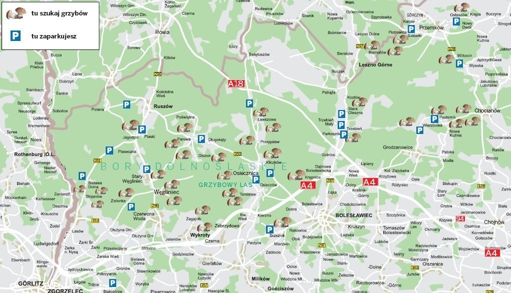 Gdzie Na Grzyby Sprawdz Na Mapach Gdzie Jest Wysyp Mapy