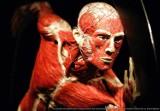BODY WORLDS - VITAL - najliczniej odwiedzana wystawa świata powraca do Wrocławia z nową ekspozycją!
