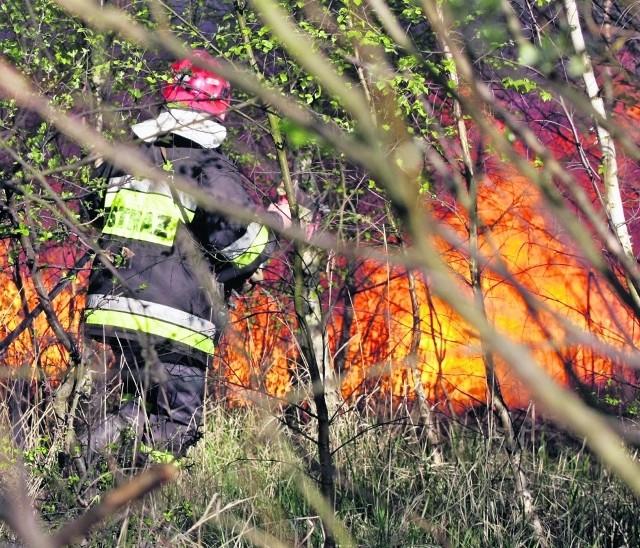 Ogień w suchym lesie bardzo szybko się rozprzestrzenia