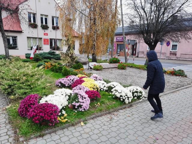 Ogrodnicy nie sprzedali chryzantem we Wszystkich Świętych, gmina ozdobiła nimi miasto
