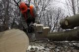 Gdańsk: Wycinka drzew przy Trasie Słowackiego (ZDJĘCIA)