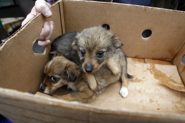 Łódzka Straż dla Zwierząt codziennie otrzymuje informacje o osobach sprzedających czworonogi na targowiskach