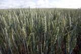 Ziemia rolna drożeje i w Polsce, i na świecie. W ciągu 8 lat ceny wzrosły pięciokrotnie