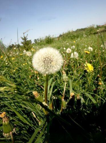 Która impreza w regionie podobała się Wam najbardziej? A może wybraliście się na piknik na zieloną łąkę?