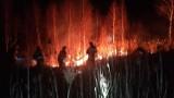 Biebrzański Park Narodowy. Trwa liczenie strat po pożarze. Rząd zapowiada zaostrzenie kar za nielegalne wypalanie traw (zdjęcia)