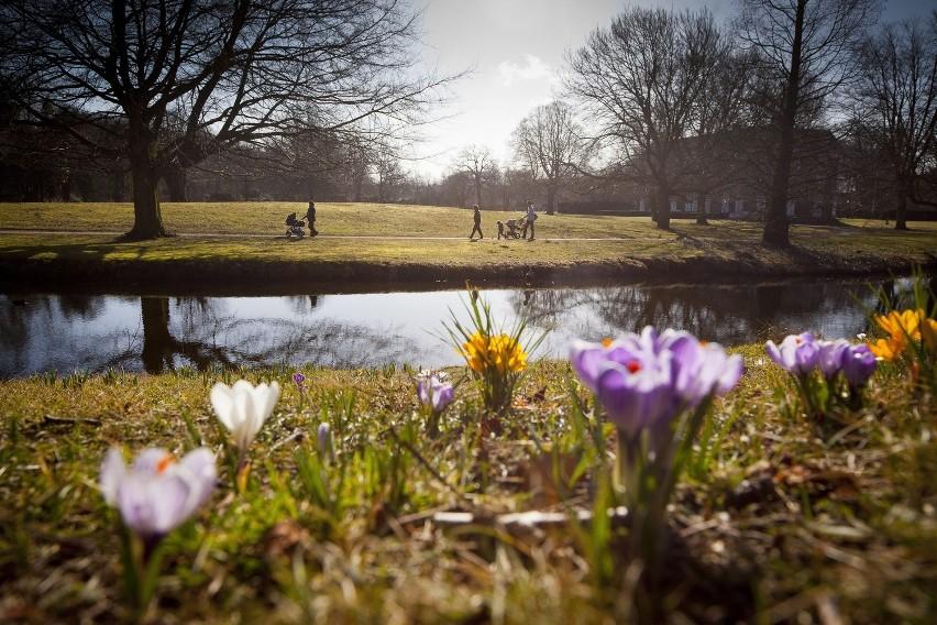 Rozleniwiający widoczek z parku Clingendael w Hadze. Tylko pozazdrościć. Popatrzcie sobie i jedziemy dalej.