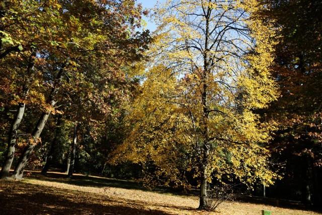 W Krakowie ma przybyć lasów. Aktualnie największym jest las Wolski, który zajmuje ponad 400 ha