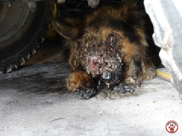 Na posesji znaleźli psa w stanie agonalnym. Sąd stwierdził: nikt nie znęcał się nad zwierzęciem