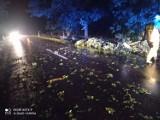 Powalone drzewa, zerwane linie energetyczne. Nocna burza w powiecie wieluńskim i okolicach dała się we znaki