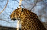 Zwierzęta w krakowskim zoo zwęszyły wiosnę i zaczynają buszować po ogrodzie [24.02]