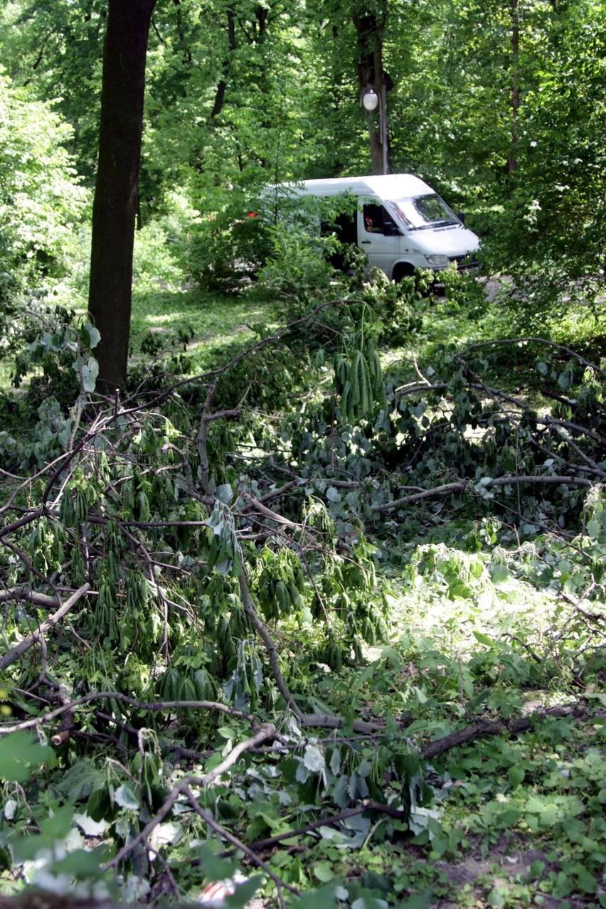 W Saskim: Podcinaja drzewa, ale pamietają o ptakach