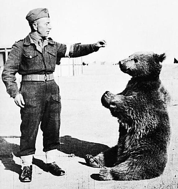 Niezwykle przyjacielski Wojtek, niedźwiedź syryjski, którego adoptowali polscy żołnierze na Bliskim Wschodzie, był ulubieńcem wszystkich