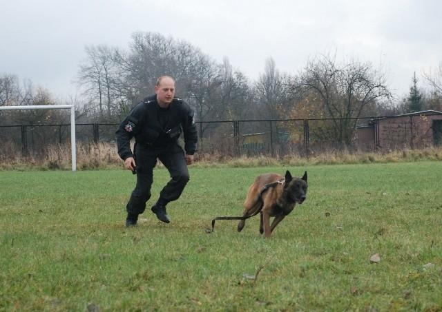 Policyjny pies Bawet dogonił i obezwładnił uciekającego włamywacza.