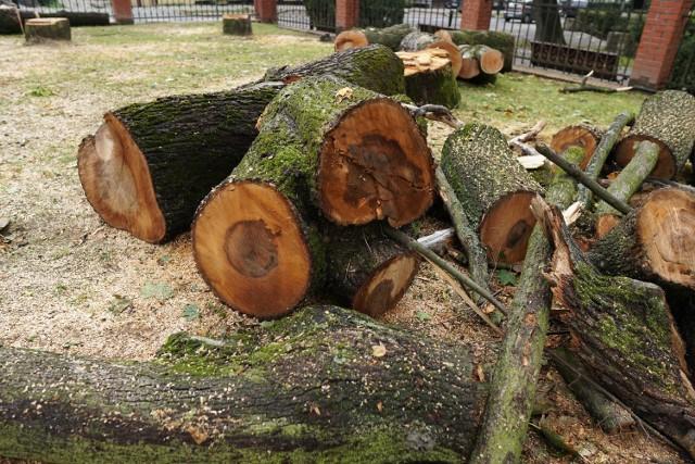 Wycięto w pień 40 drzew przy parafii w Zdroju