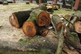 Jastrzębie-Zdrój: kontrowersje po wycięciu 40 drzew przy parafii w Zdroju, w sąsiedztwie zabytkowego parku. Proboszcz miał rację?