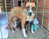 Nowy Sącz/ Wielogłowy. Schroniska dla zwierząt apelują o wsparcie. Jak możemy pomóc zwierzakom?