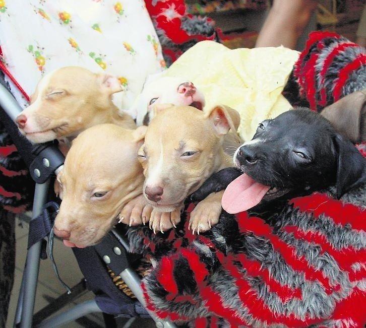 Wspaniały Nielegalny handel: Sprzedam smycz, pies za darmo | Głos Wielkopolski OA72