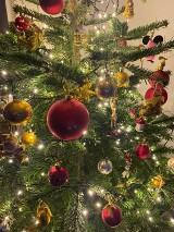 Choinki bożonarodzeniowe Czytelników portalu Kalisz.NaszeMiasto.pl. Zobacz najładniejsze świąteczne drzewka. ZDJĘCIA
