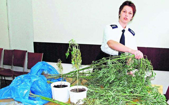 Policjanci rekwirują często całe uprawy narkotyku