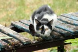 Z osiedla Wschód w Wągrowcu zniknęła budka dla bezdomnych kotów
