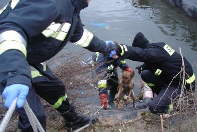 Tonącego psa ratowali strażacy.