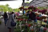 Zarezerwuj miejsce handlowe na targowisku w Dębicy
