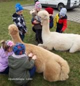 """Żory: """"Przez zabawę do nauki"""", czyli alpaki odwiedzają przedszkolaków"""