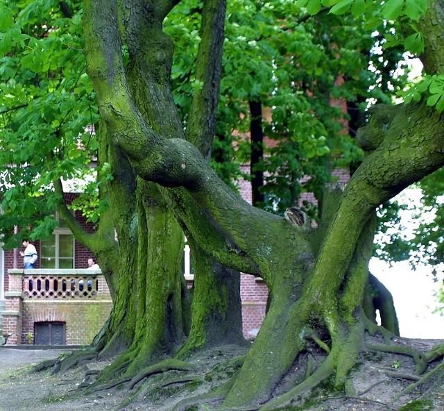 W poniedziałek w Owińskach pod Poznaniem otwarty zostanie Park Orientacji Przestrzennej