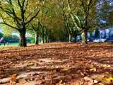 Jesienny obraz Szczecina. Zdjęcia od naszych internautów [ZDJĘCIA]