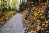 Jesień w Łazienkach Królewskich. Zjawiskowe zdjęcia ze spaceru po najpiękniejszym ogrodzie w Warszawie