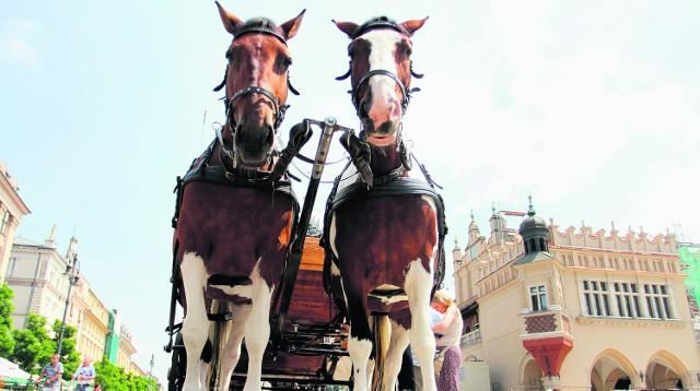 Konie przez wiele godzin prażą się w słońcu. Wśród nagrzanych murów, na rozgrzanym asfalcie stoją jak na patelni
