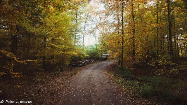 Koronawirusowa jesień 2020 w gminie Puck. Lasy pełne kolorów skrzących się w promieniach listopadowego słońca