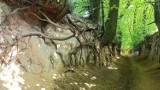 Niezwykłe wąwozy w Kazimierzu Dolnym: Korzeniowy Dół i Wąwóz Śmierci. Zobacz zdjęcia