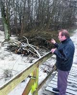 Sołtys Redkowic oburzony wycinką drzew wokół parku