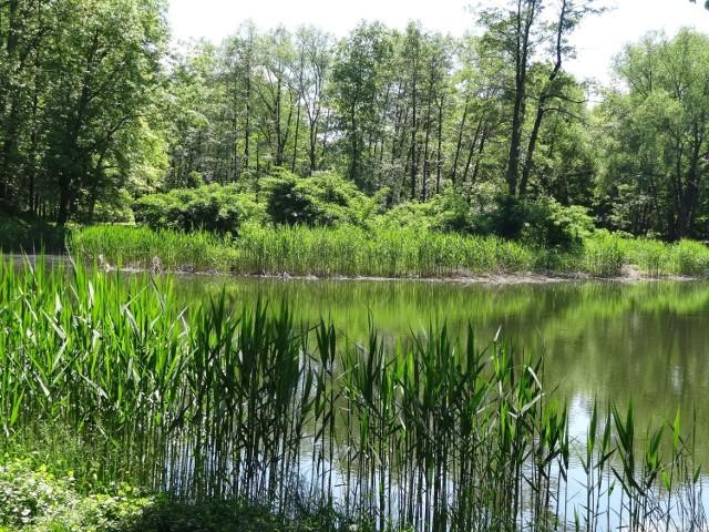 Wyspa to prawdziwa zielona perełka kompleksu zamkowo - parkowego.
