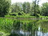 Nie będzie rewitalizacji pięknej wyspy na stawie w kompleksie zamkowo – parkowym w Międzyrzeczu