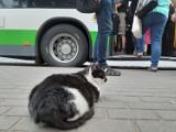 Najbardziej znany kot ze Szczecinka ma kolegę. Koci kącik na przystanku autobusowym [zdjęcia]