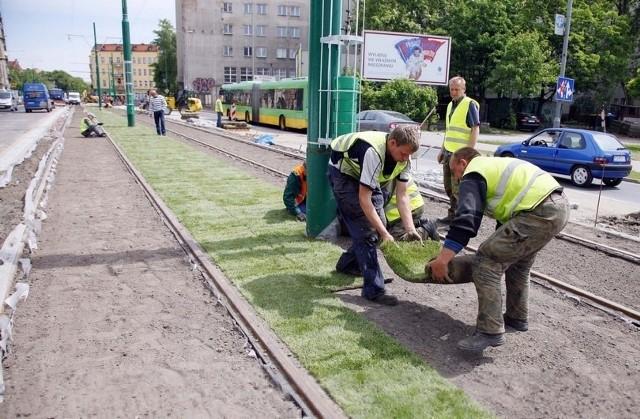 Torowisko na ulicy Grunwaldzkiej zaczęło się zazieleniać. Robotnicy układają między szynami trawę.
