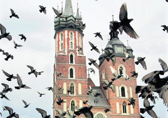 Gołębie z krakowskiego Rynku tym razem nie zostały zatrudnione do promocji miasta